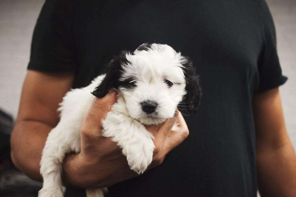 iroda - kutya