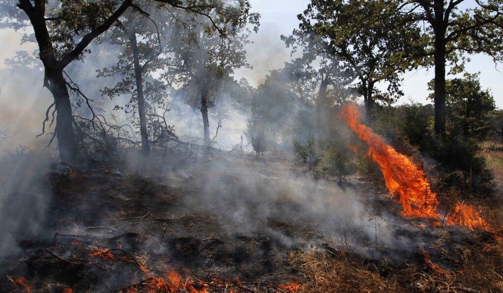 Amazonas - tűz - 2019 - augusztus