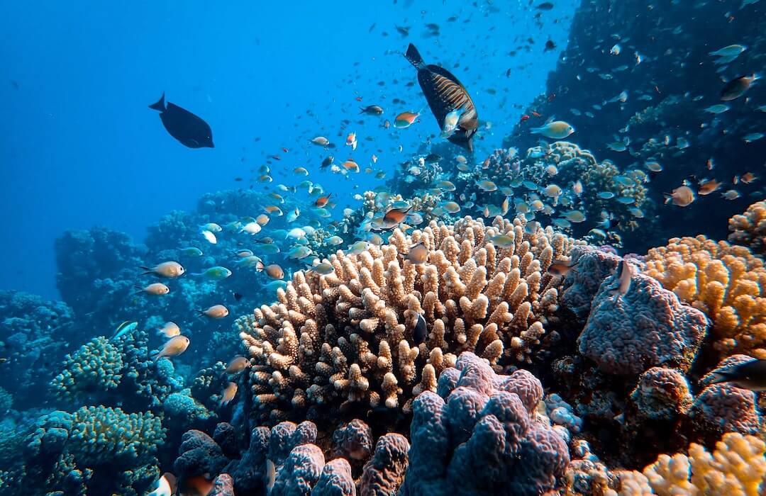 klímakrízis - korallzátony